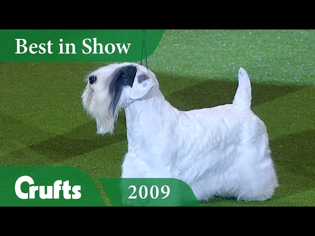 Sealyham Terrier wins Best In Show at Crufts 2009 | Crufts Classics
