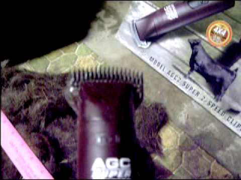 PetProductsShop - Andis AGC Super 2-Speed Dog Clipper - YouTube