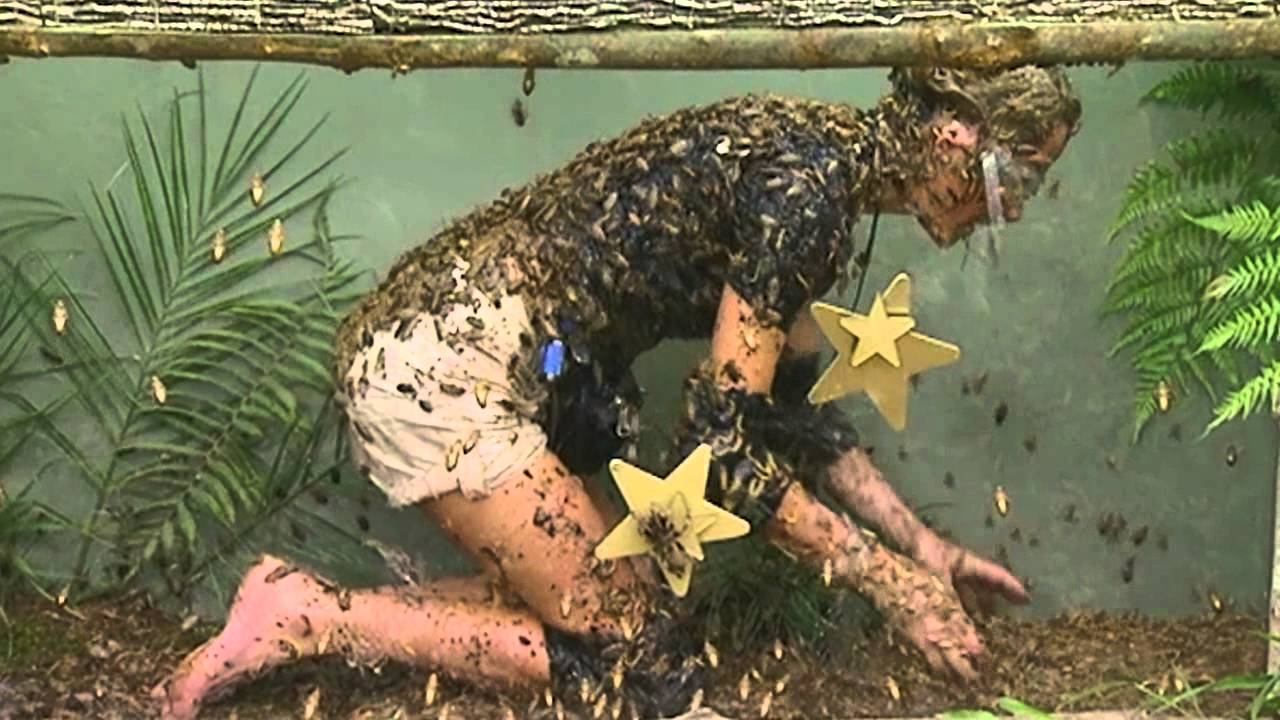 Download Alex Best Gets Feathered Searching For Stars | I'm A Celebrity... Get Me Out Of Here!
