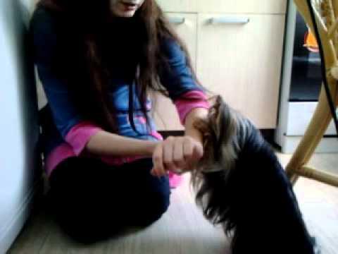 Команда 'Стыдно' как научить собаку