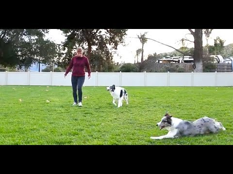 Dog Photobombs Tricks Video -  Dog Training