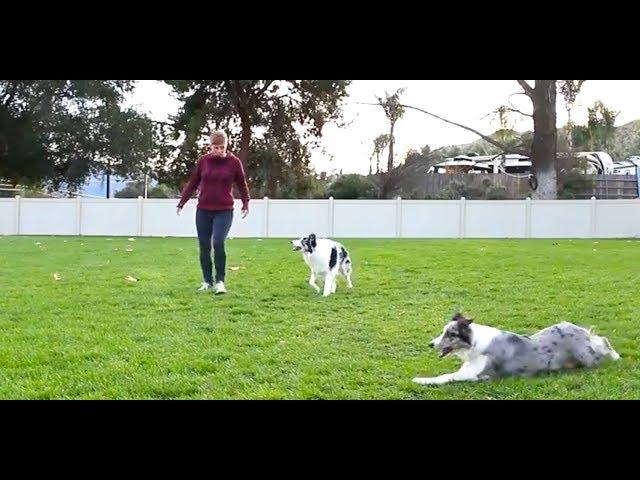 Dog Photobombs Tricks Video -  Dog Training