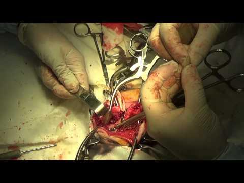 Травматология для всех