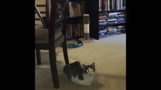 "Fetty Cat - Parody of ""Different Now"" by Fetty Wap"