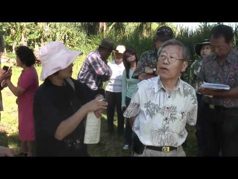Master Cho Consulting Natural Farming Papaya in Hawai'i