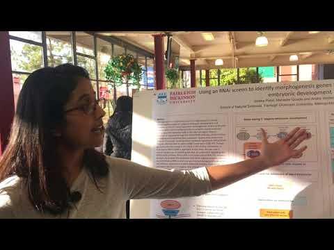Using RNAi Screen To Identify Morphogenesis Genes Functioning During Embryonic Development