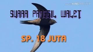 Download Lagu SUARA PANGGIL WALET || SP. 18 JUTA mp3
