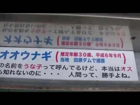 長崎市樺島のオオウナギ井戸へ… 残念ながら8代目うな太郎は亡くなっていた(ToT) 20161030 105702