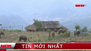 ⚡ Tin mới nhất | Người dân Sa Pa đưa trâu đi tránh rét
