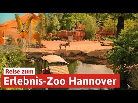 Erlebnis-Zoo Hannover - Reise in die Welt der Tiere