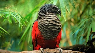 10 Beautiful Exotic Birds You Won't Believe Actually Exist