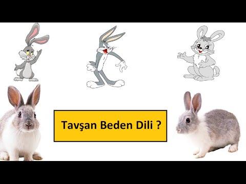 Tavşan Beden Dili