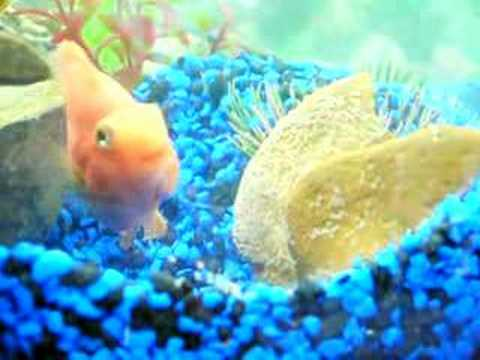 Fish Laying Eggs Youtube