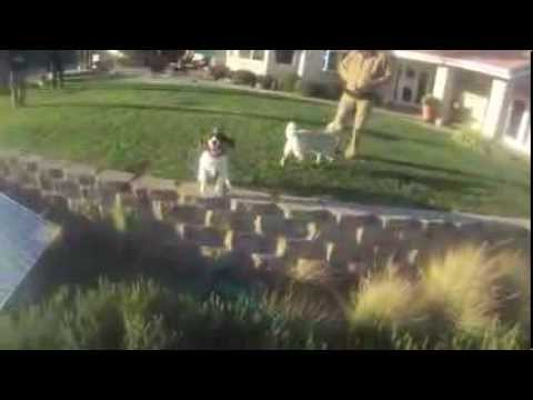 Quadcopter Training Flight with dogs