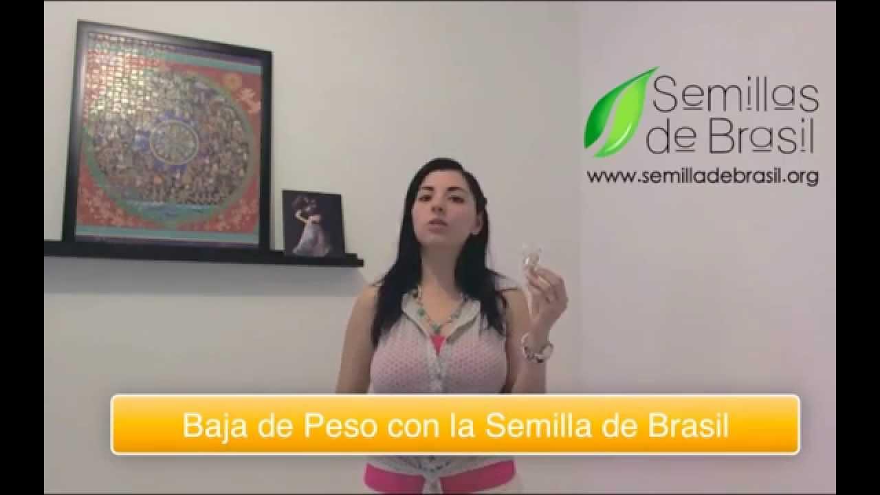 Semilla de brasil baja de peso de forma natural youtube Semilla de brasil es toxica