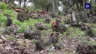 منح 370 تصريح قطع أشجار حرجية في عجلون - (4-4-2019)