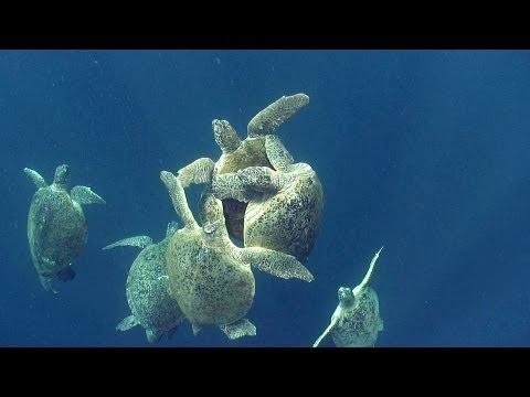Sea Turtles | JONATHAN BIRD'S BLUE WORLD