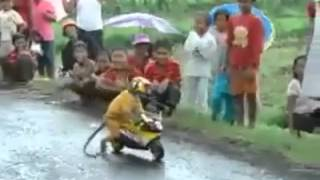 Monkey riding a motorcycle