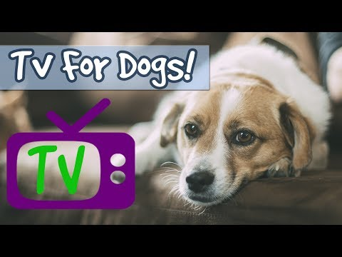 TV FOR DOGS! 5 Hour Playlist, Soothing Nature Footage Combined with Relaxing Music for Calming Dogs!