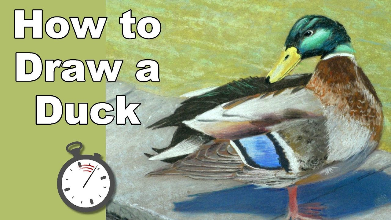 How to Draw a Mallard Duck at a Pond in Pastel Time Lapse ...