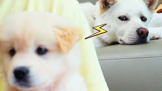 Eng) 진돗개 질투 모음집ㅣJealous Dog Wa…