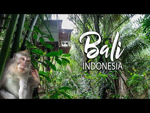 I Love This Unusual Jungle Tree House Ubud Bali
