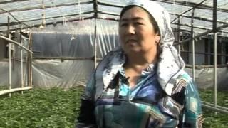 Поздний урожай  Узбекистан