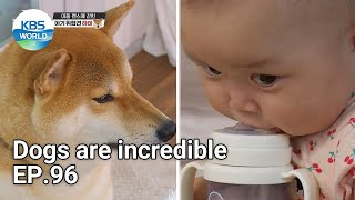 Dogs are incredible EP.96   KBS WORLD TV 211020