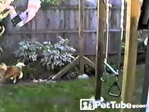Doggy Doesn't Like the Swing- PetTube