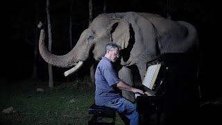 Beethoven Moonlight Sonata for Old Elephant