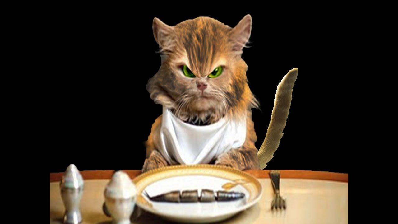 best diet cat food