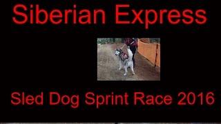 Sled Dog Sprint Race 2016