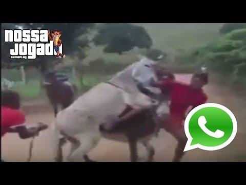 Video do whatzapp 2016 - Pra morrer de rir - Putaria com jumento