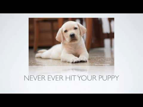 Puppy Training Tips] How Can I Stop Puppy Biting And Other Aggressive