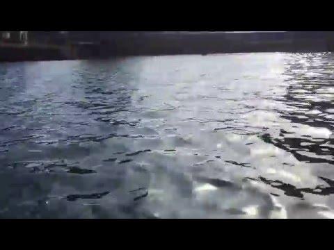 Zushi,Tagoe River Kanagawa Prefecture From Kayak,2676,2,7Sun