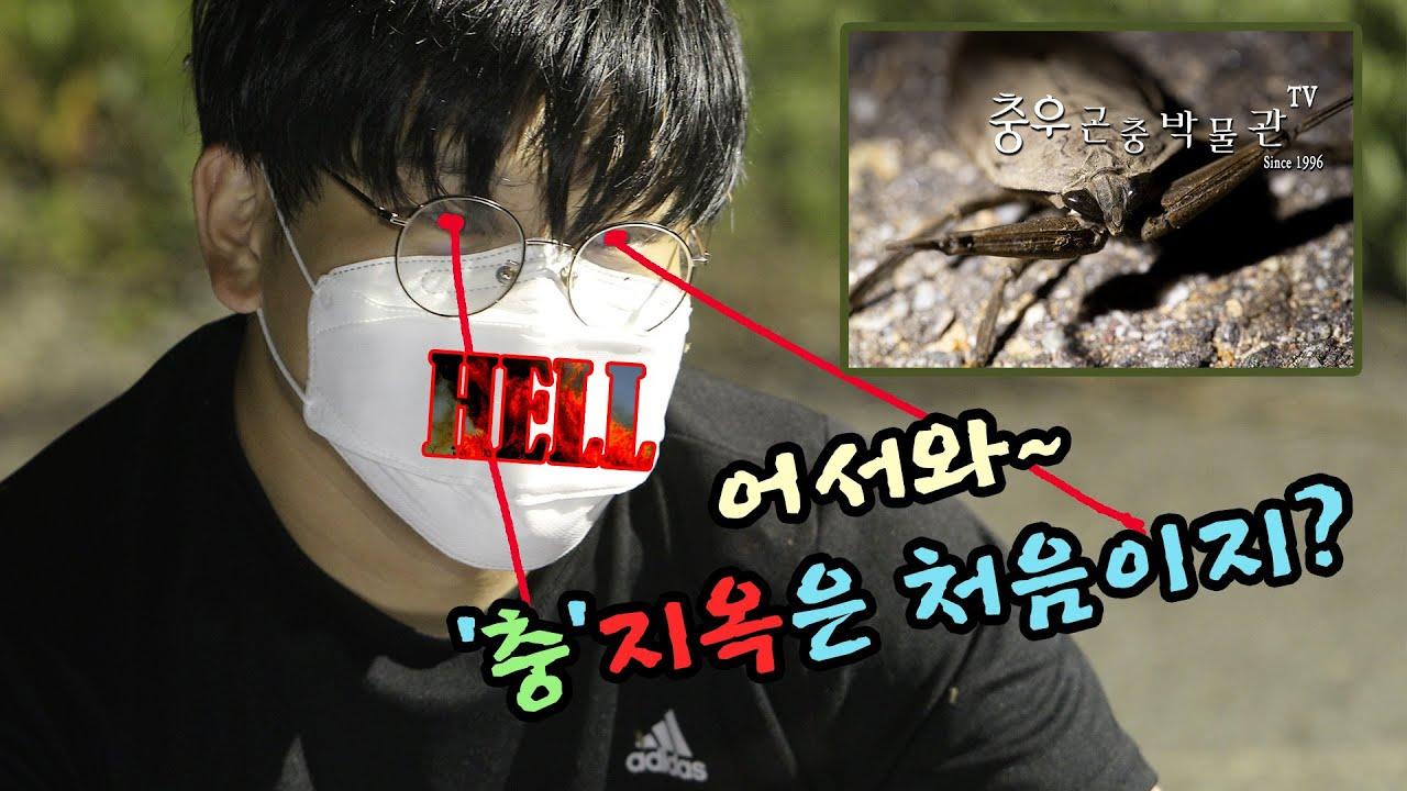 [이벤트] 곤충을 너무 좋아 하길래,  곤충 파라다이스로 데려가 보았습니다! (물장군 + 둥글장수풍뎅이) [충우곤충박물관]
