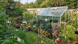 มาอัพเดทสวนหลังบ้านเล็กๆ ในเมืองหนาว ปลูกอะไรได้บ้างในเดือนสิงหาคม (10 Aug.20)
