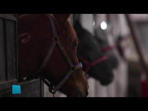 -ملكة جمال خيول الغوطة- يفتك بها المرض والضعف بعد سنوات الحصار!