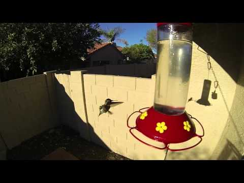 A Hummingbird Visitor at My New House
