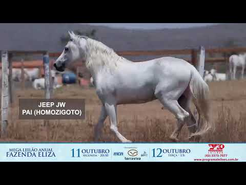 lote 1016 - HELLDAR ELIZA