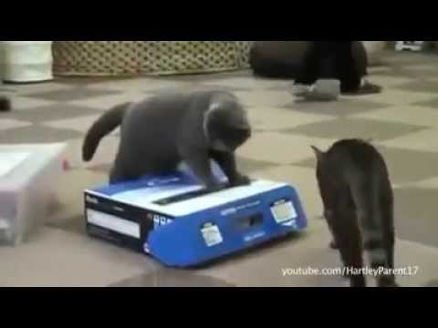 Funny Cat Videos If I Fit I Sit LOL