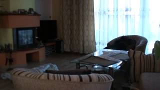 Co robią psy gdy właścicieli nie ma w domu?