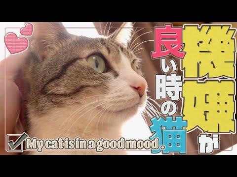 機嫌が良い時の猫