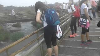Baixar Observando Cascadas desde Puente del Iguazú