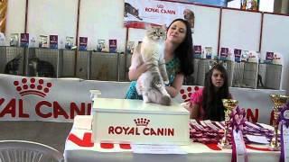 Невский маскарадный кот на выставке
