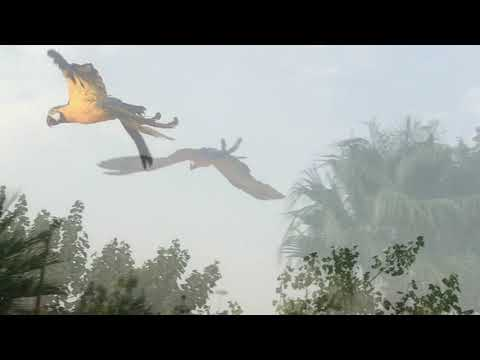 Free Flight In King Abdoulah Park With Captain Flint And Jasass