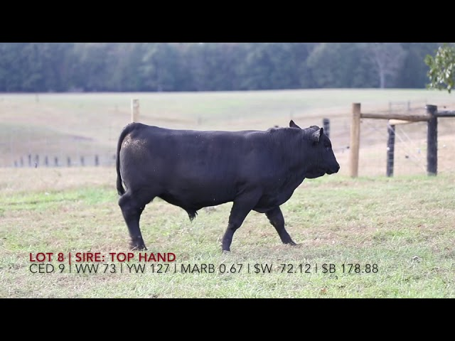 Edgewood Angus Lot 8