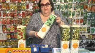 видео Плодовые кустарники -