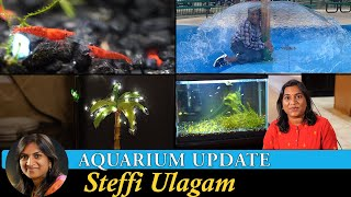 Aquarium Update | Water Park | Steffi Vlogs in Tamil