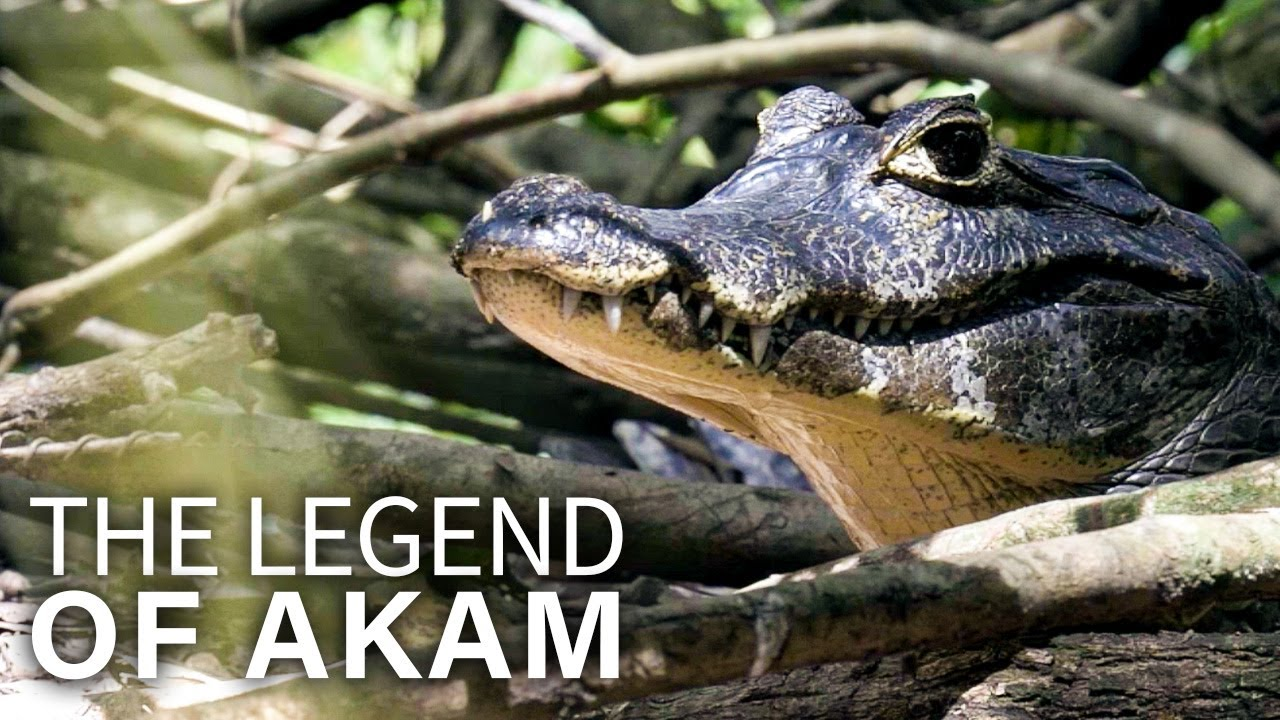 The Legend of Akam | Animal Movie | English Subs | Family